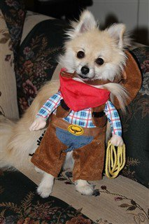 4-pomeranian-dressed-as-cowboy