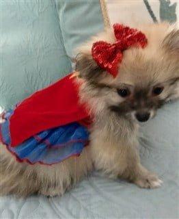 Pom in Wonder Woman costume