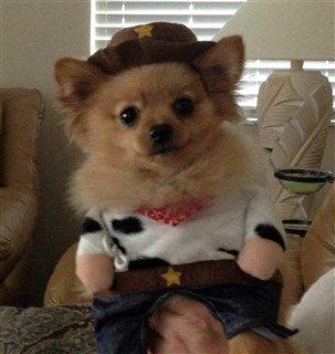 Pom cowboy costume for Halloween