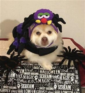 Pom in spider costume