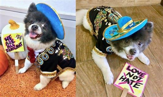 Pomeranian immigrant costume