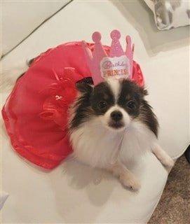 dog princess costume