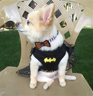 dog bat girl