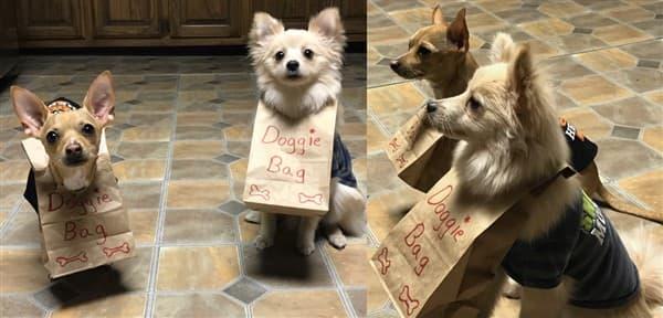 dog doggie bag costumes
