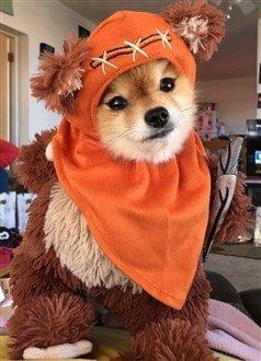 homemade Ewok costume for dog