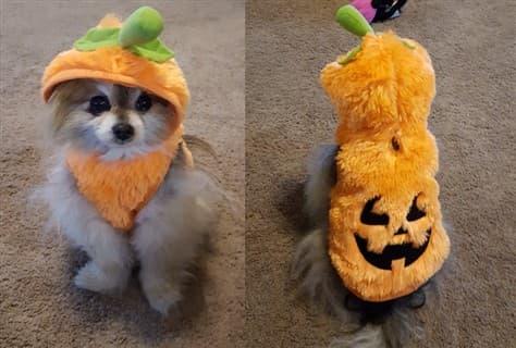 fuzzy pumpkin dog costume