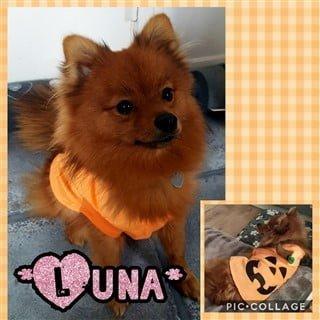 female Pomeranian pumpkin costume