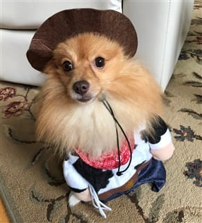 Woody Toy Story dog costume