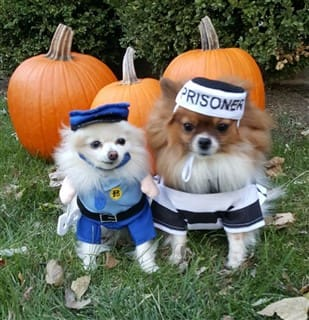 Sheriff and prisoner dog costumes