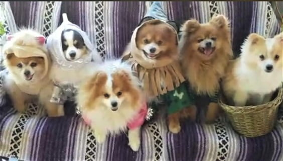 line of dogs in costumes