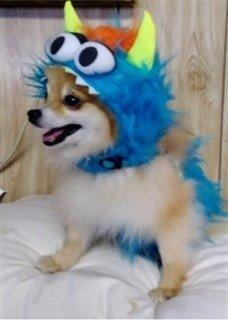 Pomeranian in monster costume