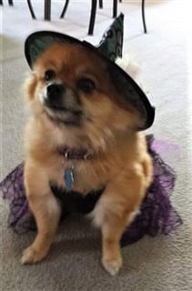 88-dog as witch