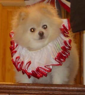 dog clown costume, Pennywise