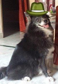 pom with hat