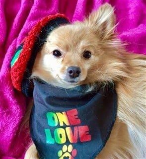 Bob Marley Rasta dog costume