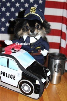 canine cop costume