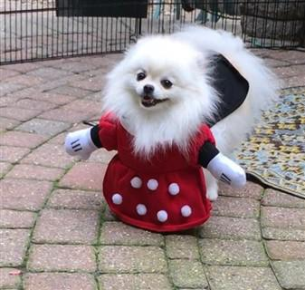 canine-minnie-mouse-costume.