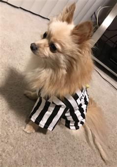 canine referee costume