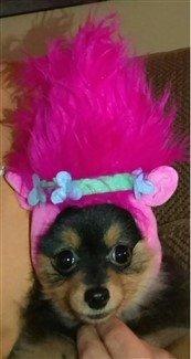 canine-troll