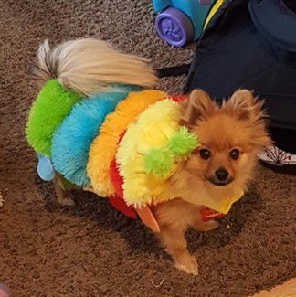 catapillar-halloween-costume-dog