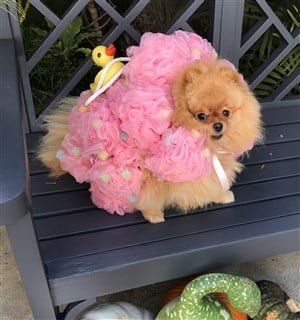 dog loofa costume with rubber duck
