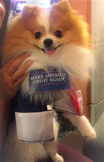 dog president costume