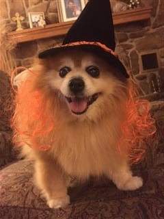 dog witch costume with orange hair