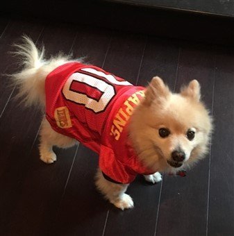 football-costume-small-canine