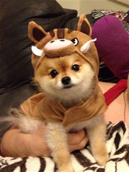 lion-king-dog-costume