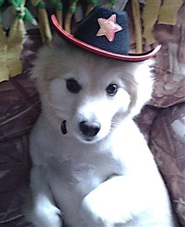 dog with marshal hat on