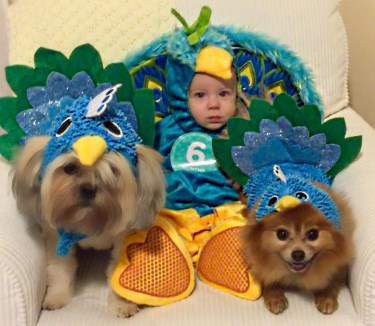 Pom in peacock costume