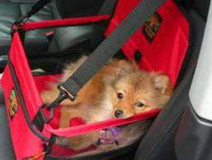 Pomeranian in red car seat