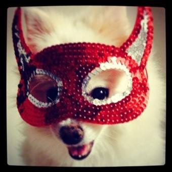pomeranian-wearing-red-mask