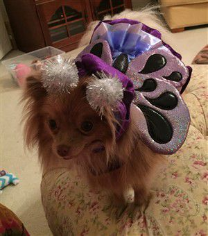 purple-butterfly-canine-costume.
