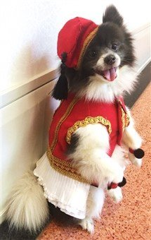 dog royal halloween costume