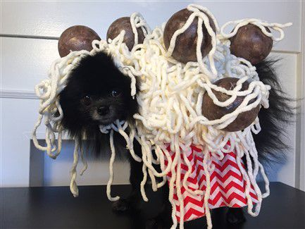 2016 Pomeranian Halloween Costume Winner- Best Costume