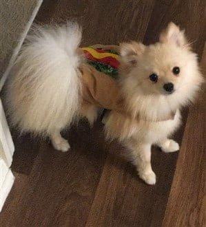 dog hotdog taco costume