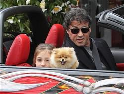 Sylvester Stallone with Pomeranian