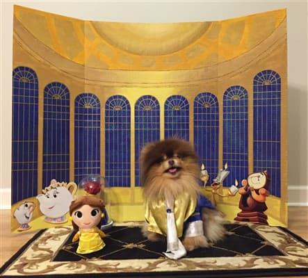 Beauty and Beast Pomeranian costume