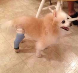 Coty in a leg cast