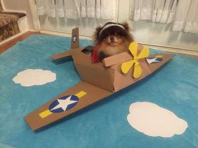 Pomeranian pilot costume