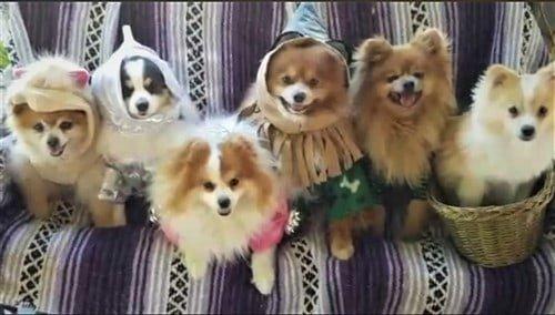 group winner Wizard of Oz Poms
