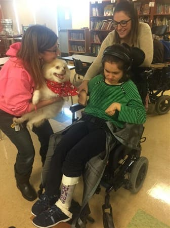 pomeranian-visiting-girl-in-wheelchair