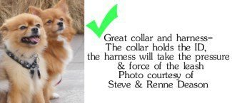 pomeranian collar best harness and collars for a pomeranian 948