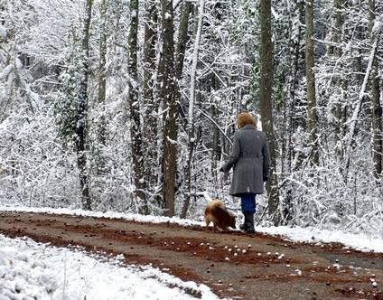 Pomeranian being taken for a walk