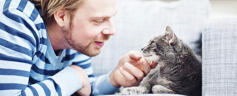 cure gatti e cani