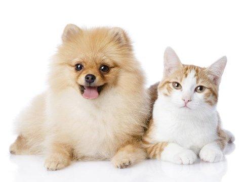 vaccinazioni per animali domestici