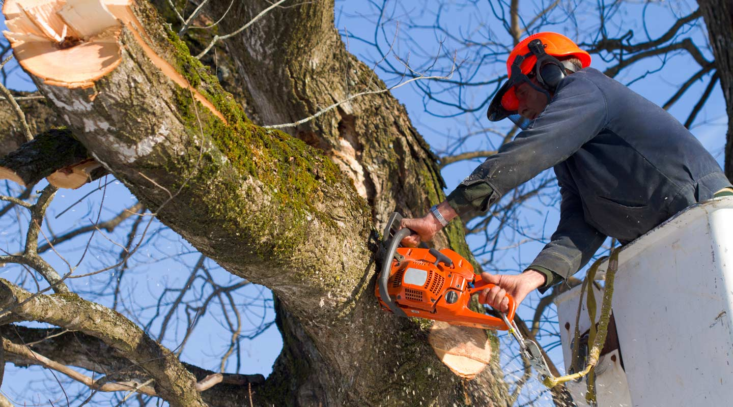 Professional cutting a branch of a tree