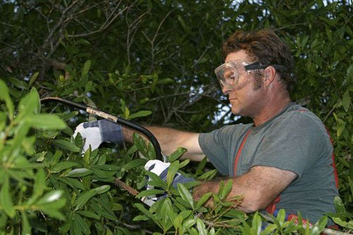 Expert trimming the bushes