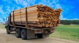 legna da ardere, legno per costruzione, pali di recinzione